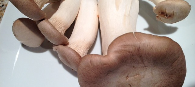 Ingredient Spotlight – King Trumpet Mushrooms