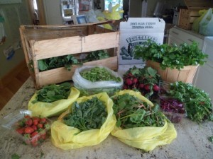 Bracco Farms CSA Box